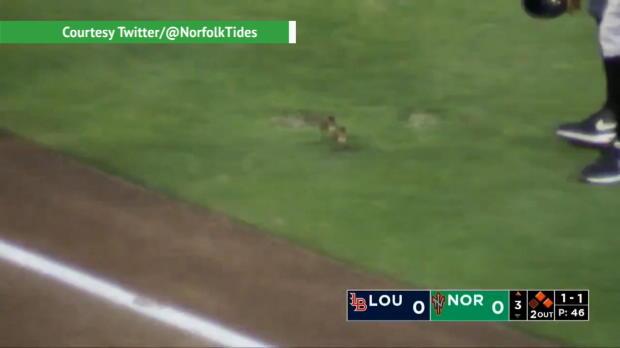 Baseball: Enten-Küken stürmen das Spielfeld
