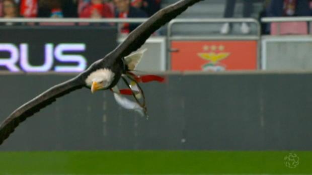 Benfica im Höhenflug, Lindelöf vor Abflug?