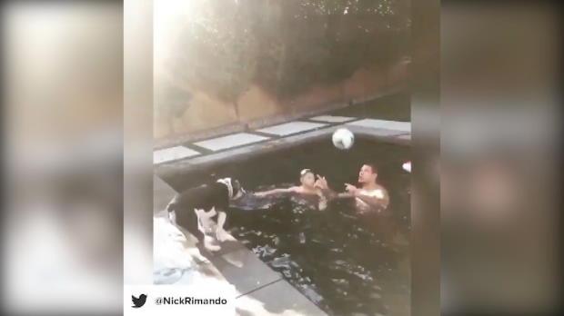 Kopfball-Challenge: 1:0 für den Hund