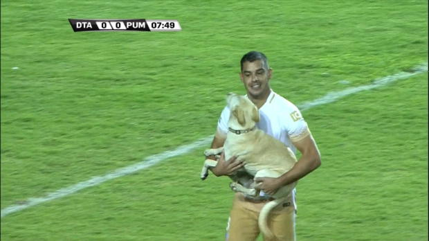 Copa Libertadores: Spieler trägt Hund raus