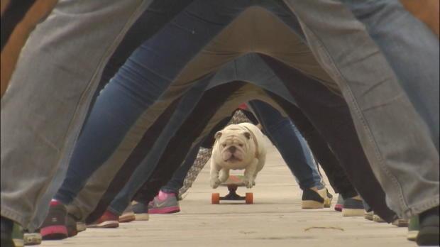 Skateboard: Hund mit abgefahrenem Weltrekord