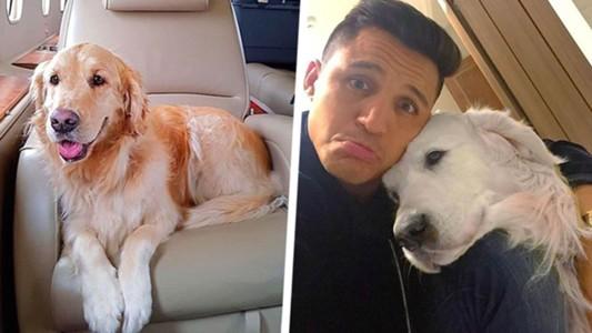 ผลการค้นหารูปภาพสำหรับ แขกบ่นโรงแรมเลือกปฏิบัติรับสุนัข'อเล็กซิส'