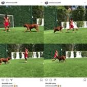 메시와 그의 반려견이 함께 축구하는 모습. 사진=메시 아내 인스타그램 영상 캡처