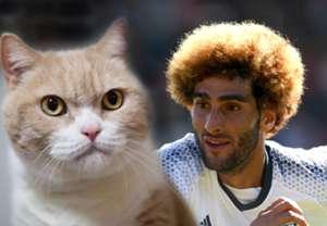Cat Fellaini