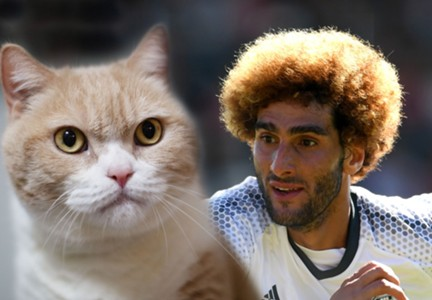 Cat Fellaini