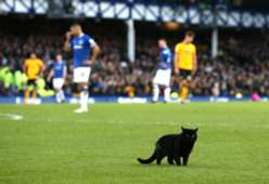 แมวดำ เอฟเวอร์ตัน