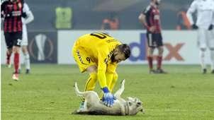 Cachorro Vardar Rosenborg 09102018