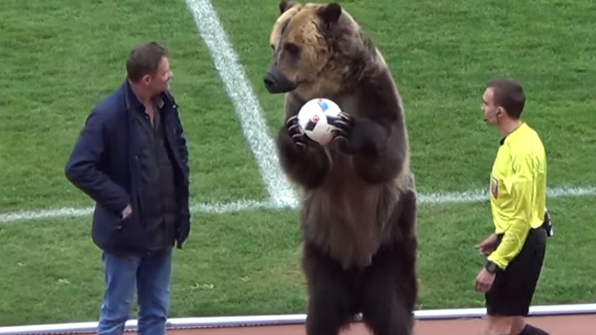 Cris de singe lors de Russie-France : une procédure disciplinaire ouverte contre la Fédération russe
