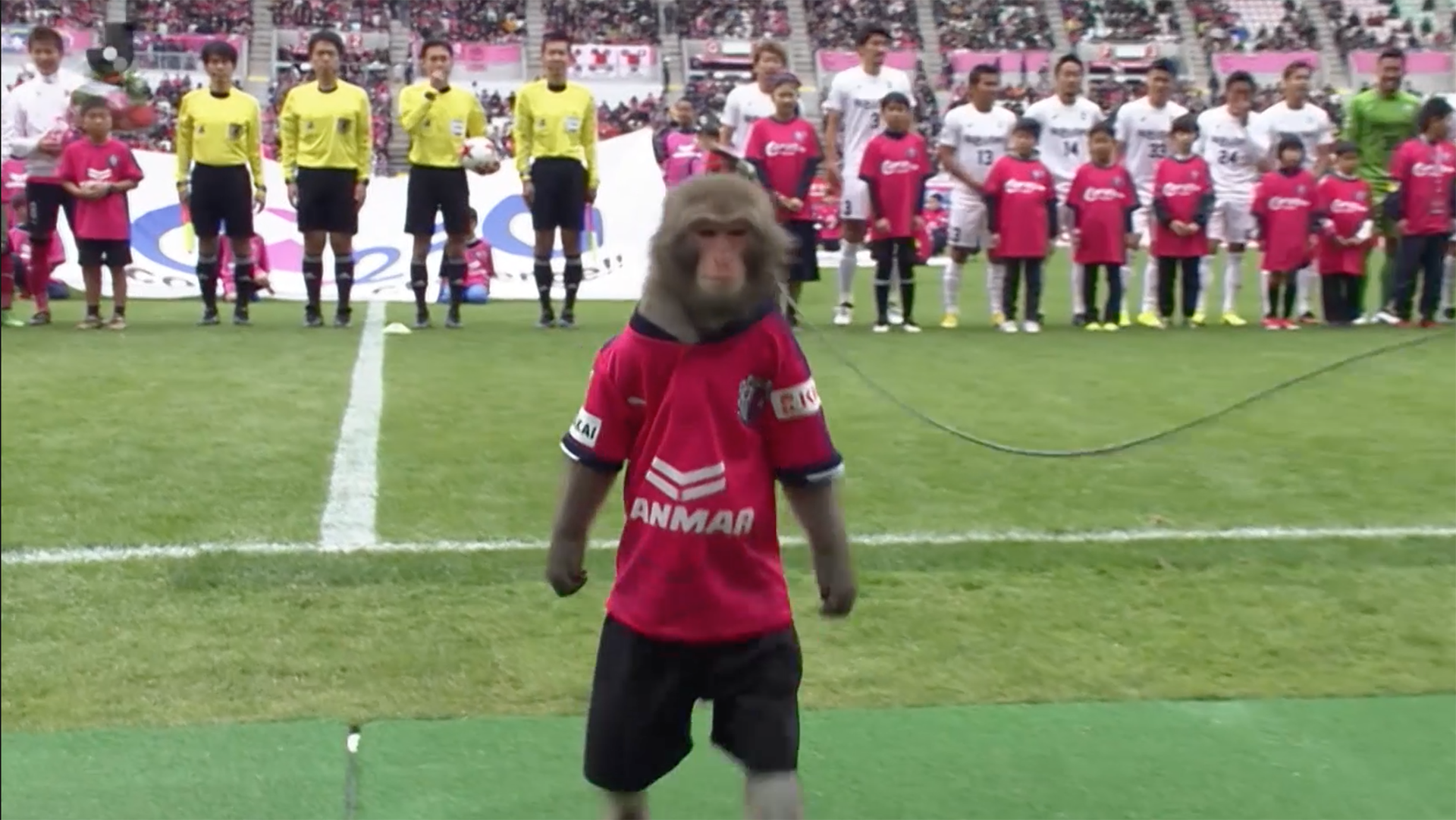 PETA condemns Japanese club for using monkey to kick off match