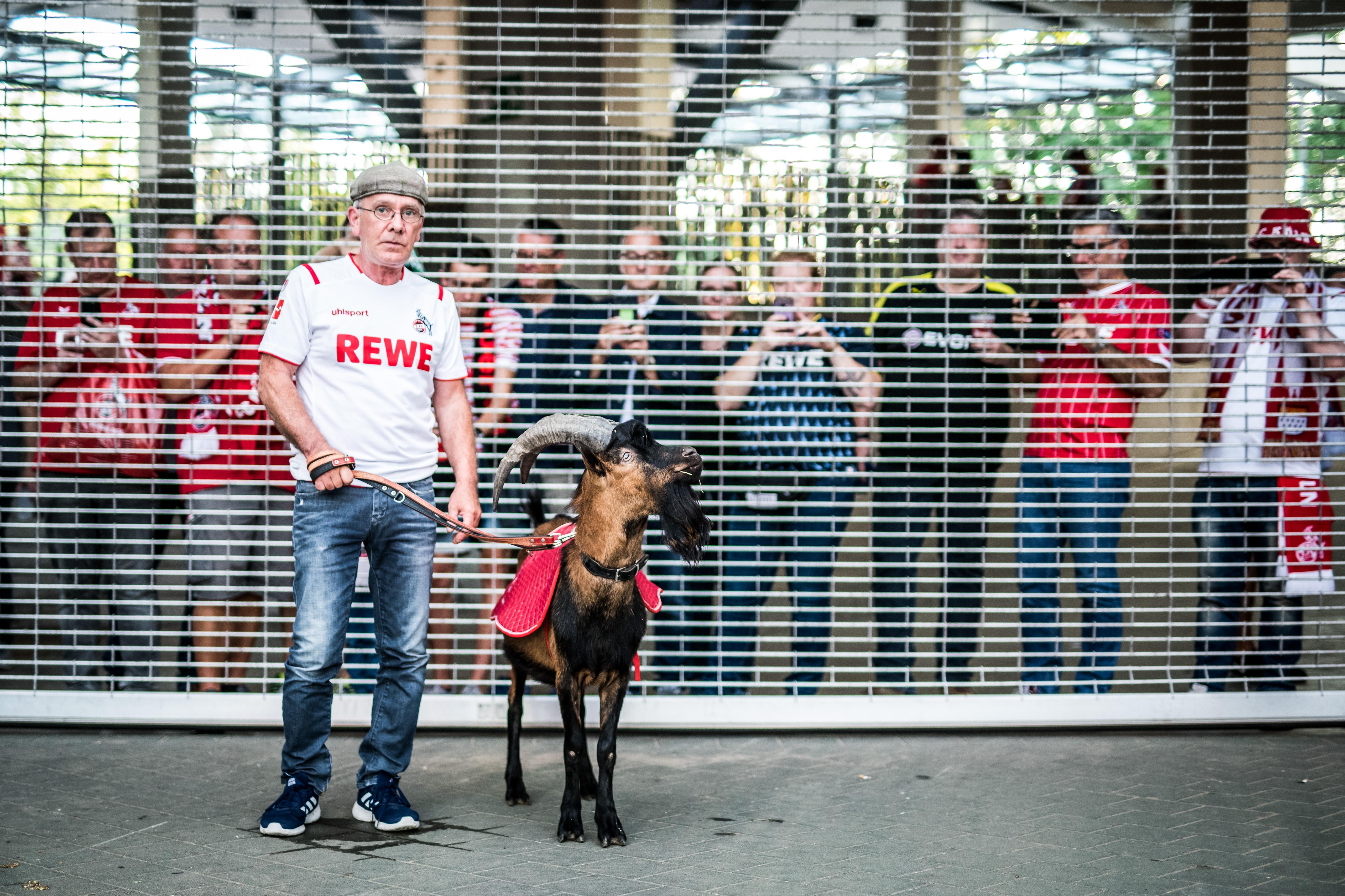 Hennes FC Koln Goat