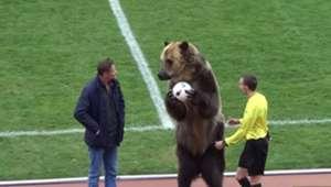 Mashuk-KMV Bear