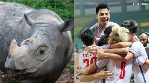 Sumatran rhino Olympic Vietnam