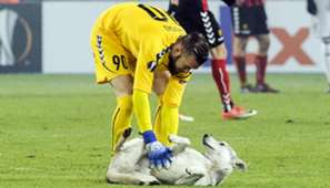 Vardar Rosenborg dog
