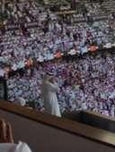 Al Ain Fans UAE