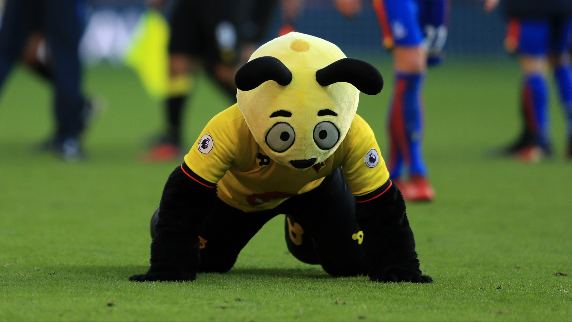 Roy Hodgson warns 'disgraceful' Harry the Hornet over diving antics