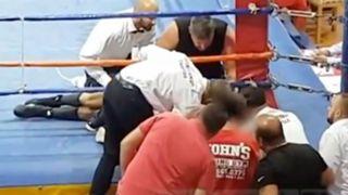 Boxer Dies