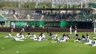 阪神タイガースのチケット入手方法|スタジアムで観戦しよう!