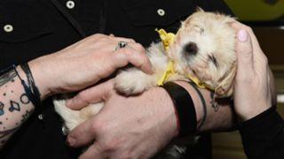 puppy-bowl-011419-Getty-FTR
