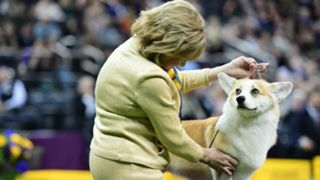 dog-show-021219-getty-ftr.jpg