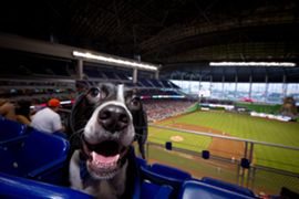 dog in stadium