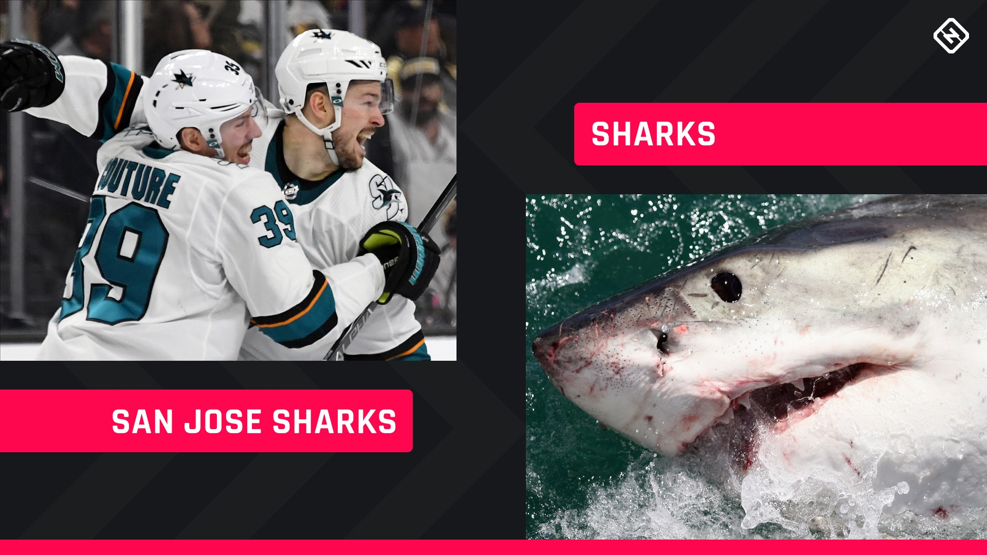 Shark Week 2019: Comparing the San Jose Sharks to... well... actual Sharks