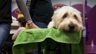 2018 Westminster Dog Show