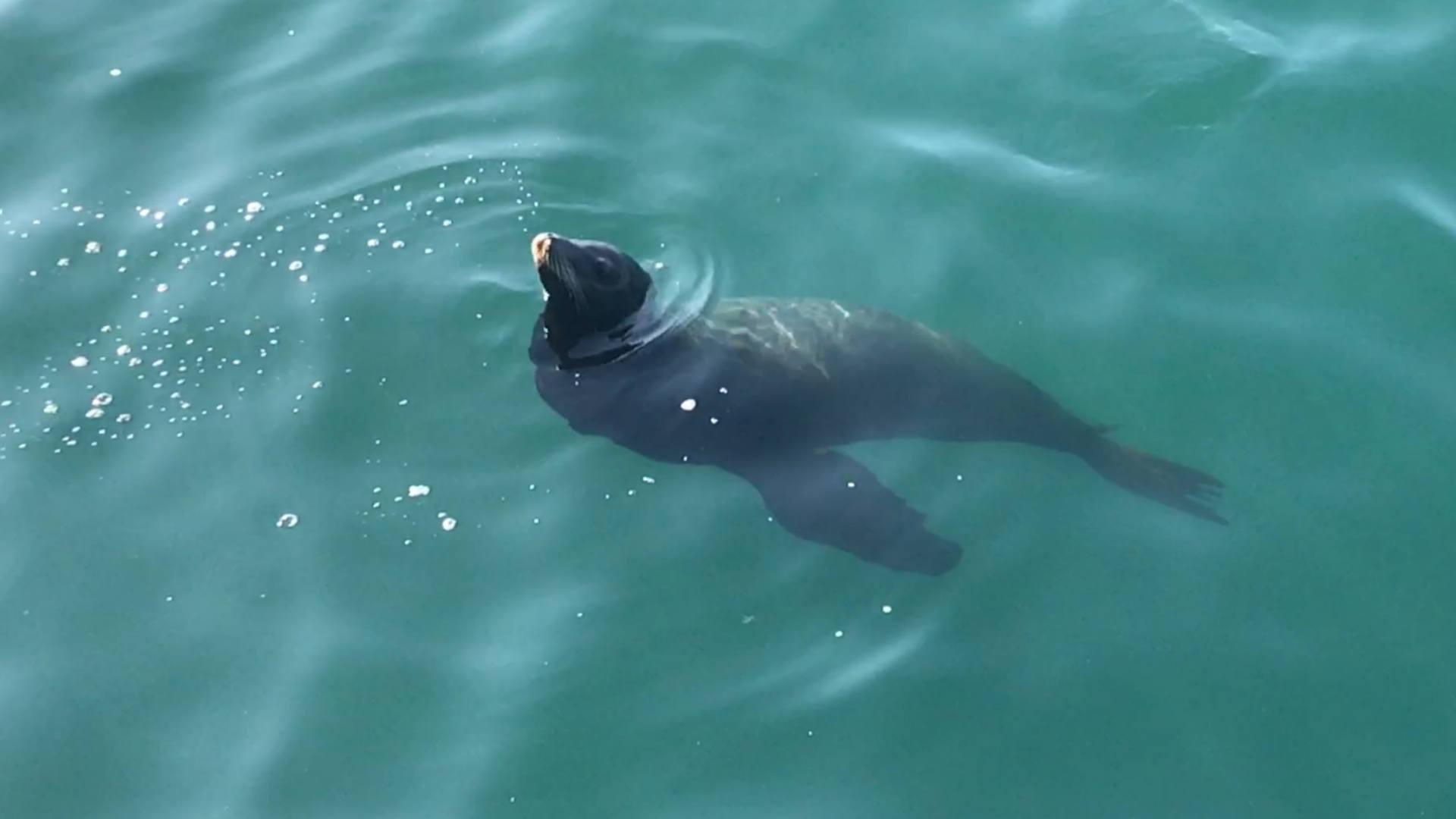 sea-lion-fagan-103118-ftr-sn.jpg