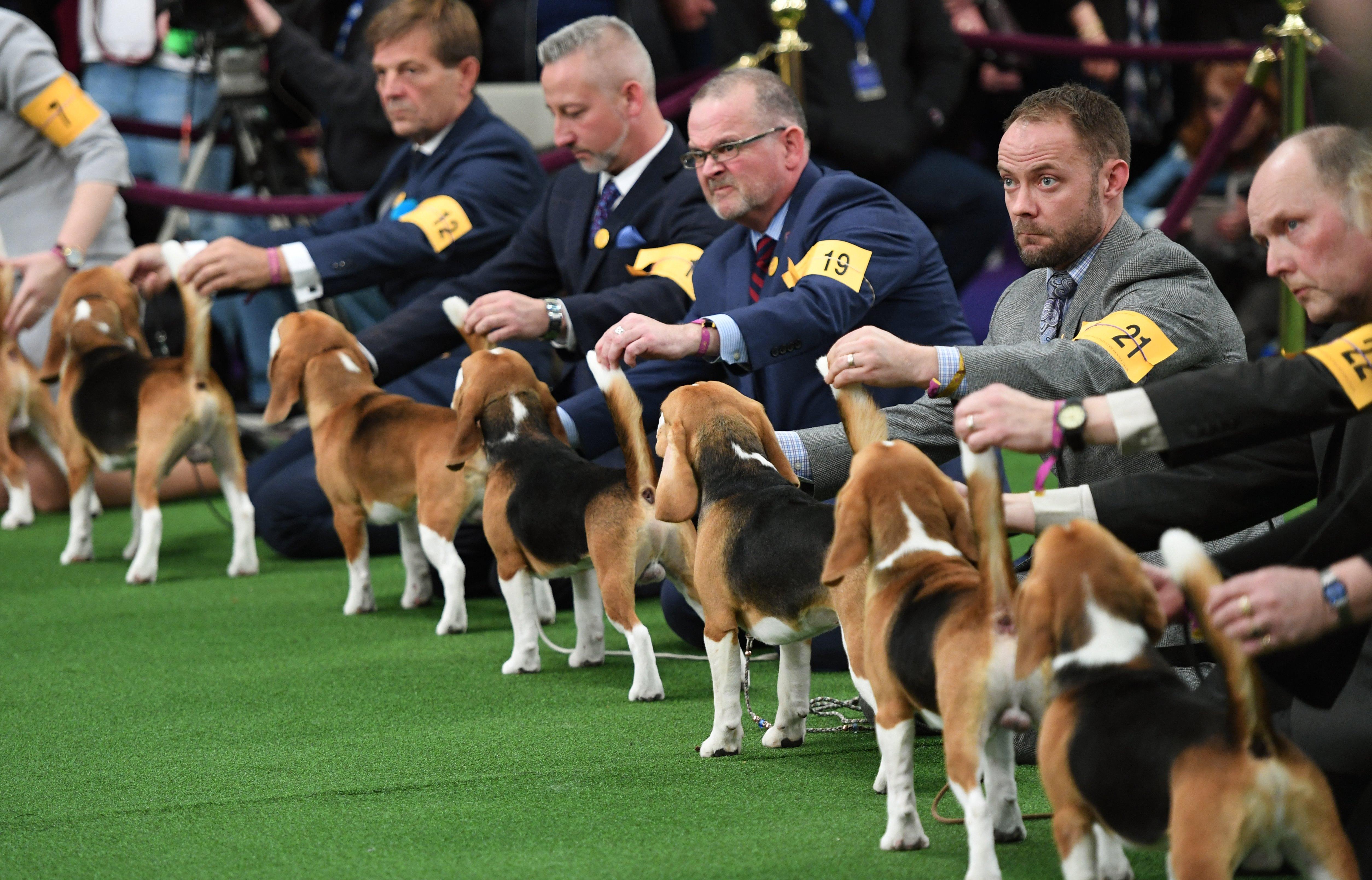 Westminster Dog Show Lineup