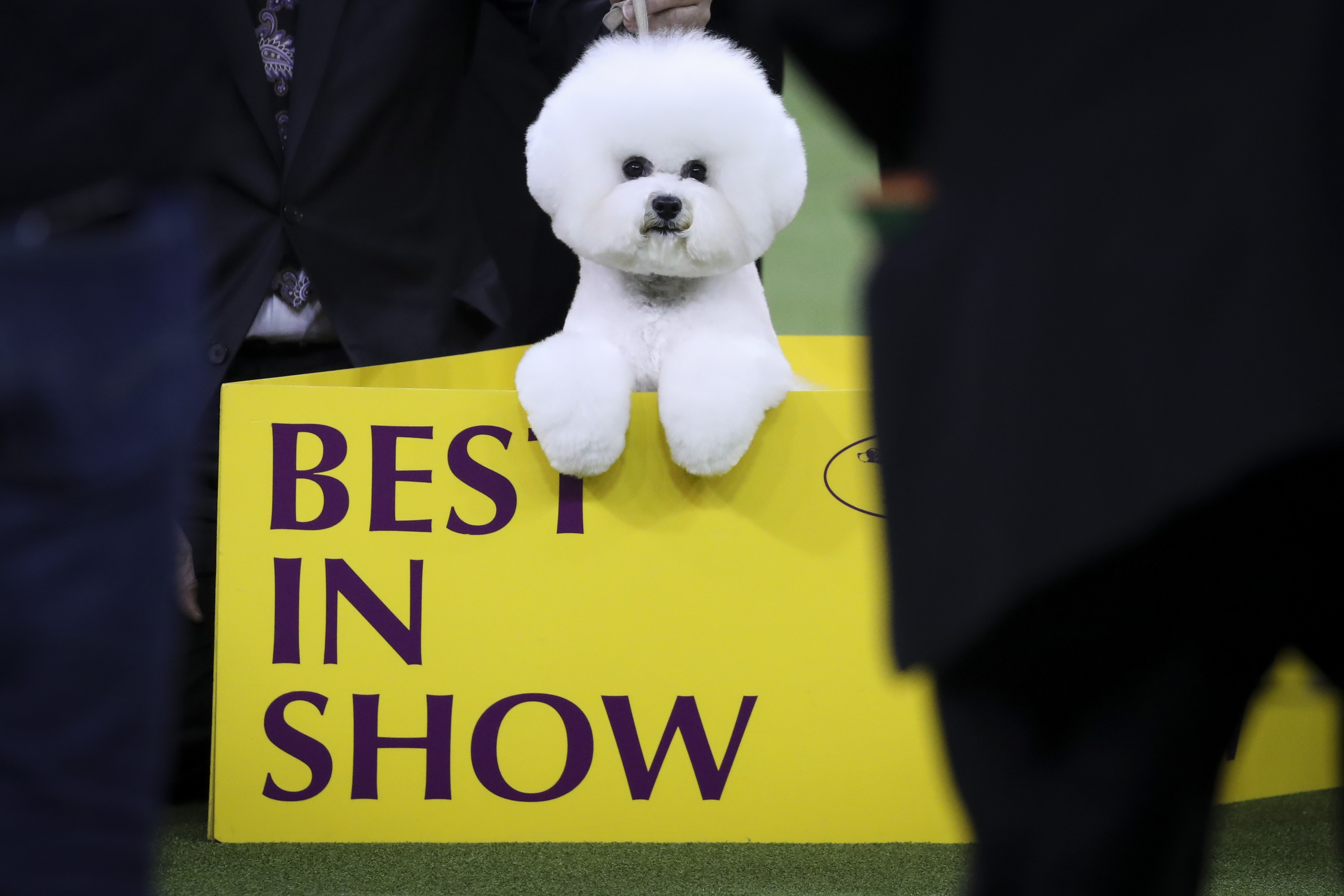 National Dog Show Best In Breed