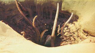Sarlacc-Pit-121115-FTR.jpeg